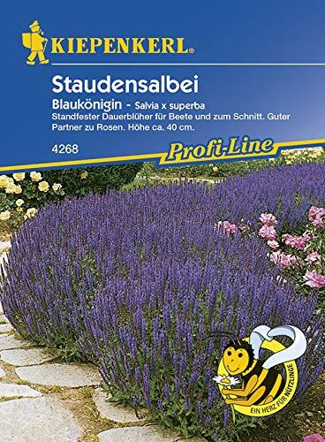 Kiepenkerl 4268 Staudensalbei Blaukönigin (Staudensalbeisamen)
