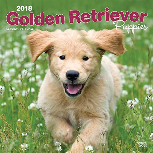 Golden Retriever Puppies - Golden Retriever-Welpen 2018 - 18-Monatskalender mit freier DogDays-App: