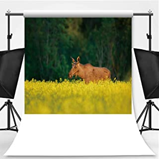 Moose in The canola Field Photography Background,121088 for Photography,Flannelette:5x7ft