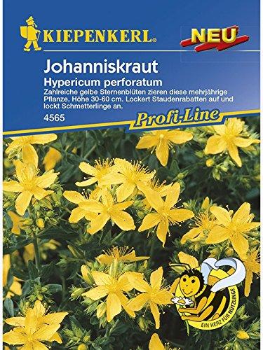 Johanniskraut Hypericum perforatum