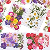 126 Pieces Dried Pressed Flowers Natural Dried Flowers Colorful Pressed Flowers Daisies Assorted Dried Flowers Leaves Petals Floral Decors for DIY Crafts Candle Jewelry Nail Pendant Making