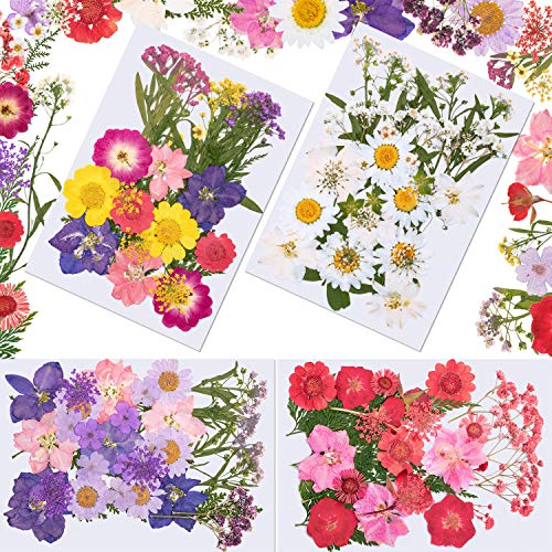 Best Dried Flower for Candles