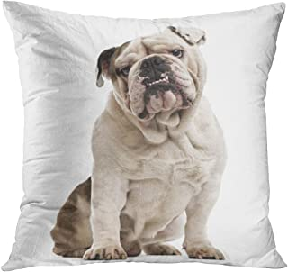 Throw Pillow Cover Dog English Bulldog Sitting and Looking at The Camera White Face Studio Decorative Pillow Case Home Decor Square 16x16 Inches Pillowcase