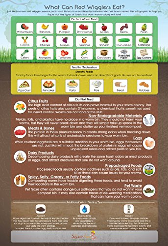 Best Price What Can Red Wigglers Eat? Infographic Reference for Live Red Wiggler Worm Composting Bin...