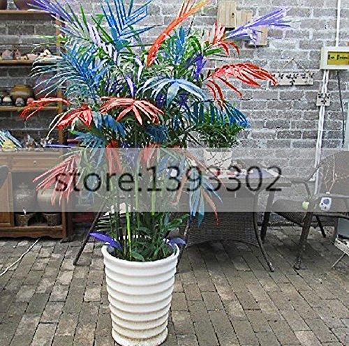 2016 nouvelles graines de plantes en pot, nouvelle couleur arbre de bambou, taux de 95% de germination, 50 graines par paquet,.