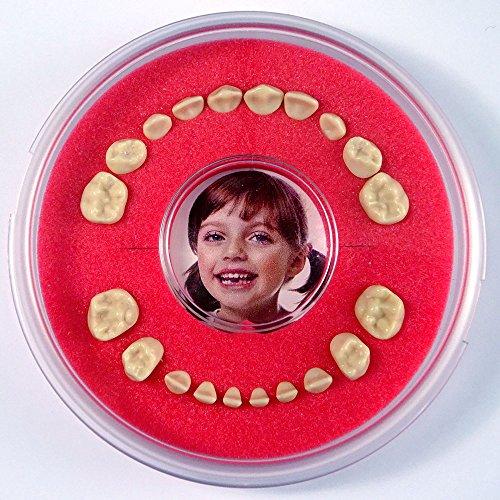 Firsty Zahndose mit Zahnfee Märchen (Rot, Jungen , Mädchen) Round Magnetic, Deutsch, Kühlschrankmagnet, Mit gratis Aufkleber. Wird jeden Freitag abgeschickt (bestellt vor 13.30 Uhr)