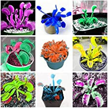 10 Pcs/Bag Insectivorous Plant Seeds Venus Flytrap Seeds, Mixed Color, Indoor Plant Seeds, DIY Plant Best Birthday Gift