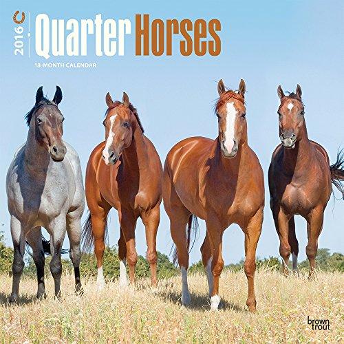 Quarter Horses 2016 Wall Calendar