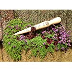 """DeWit Wooden Dibber with Brass Tip 4 Dimensions: 12"""" L x 2"""" W x 2"""" H; 0.25 lbs Shaft of tool engraved with depth measurements! Push blade into soil and swirl it around to the size needed"""