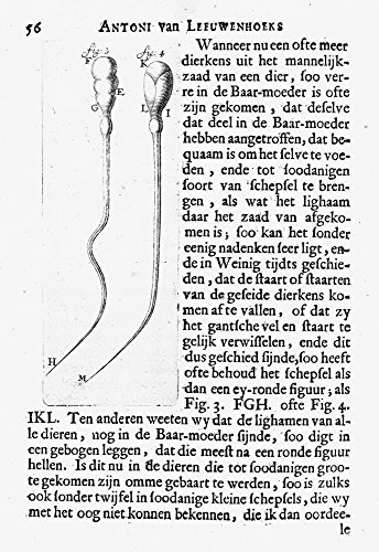 Anton Van Leeuwenhoek N(1632-1723) Dutch Naturalist Live And Dead Spermatozoon Of A Dog As Observed By Leeuwenhoek C1673 In His Single-Lens Microscope Which Had A Magnification Factor Of About 200 Pos