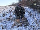 Winter Coyotes Part II
