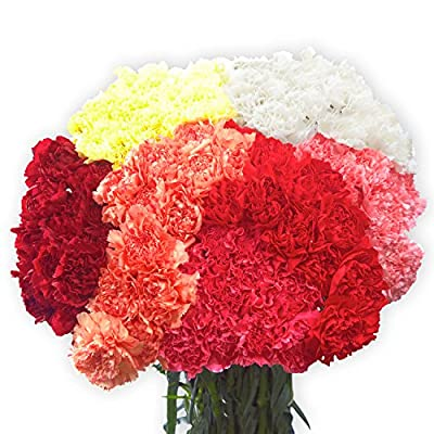 100 Assorted Carnations- Fresh Cut Flowers by Globalrose