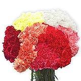 100 Assorted Carnations- Fresh Cut Flowers
