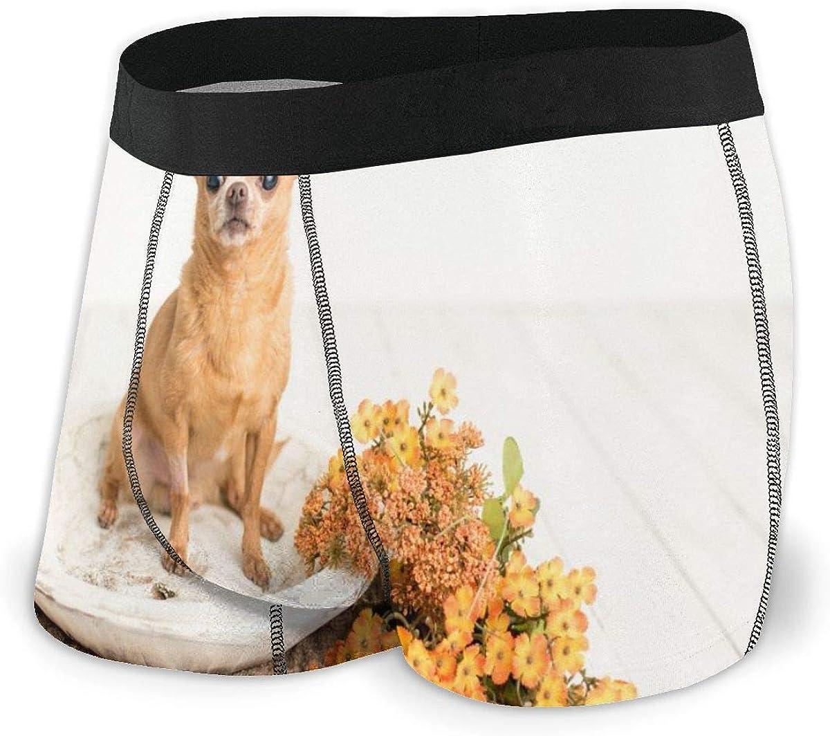 Randolph Wordsworth Mens Boxer Briefs Cute Chihuahua Dog Breathable Underwear