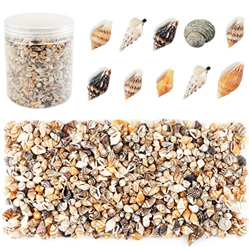 Weoxpr 2000 Pcs Tiny Sea Shells Mixed Ocean Beach Spiral Seashells Craft Charms for Home Decorations, Beach Theme Party, Candle Making, Wedding Decor, DIY Crafts, Fish Tank and Vase Filler(5-12mm)