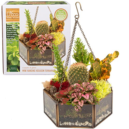 Deco Glass Geometric DIY Terrarium, Succulent & Air Plant- Hanging Mini Hexagon Shaped for Indoor Gardening Decor- Create Your own Flower, Fern, Moss Centerpiece- Amazing Holiday and Wedding Gift