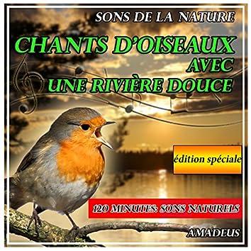 Chants d'oiseaux avec une rivière douce: sons de la nature: édition spéciale