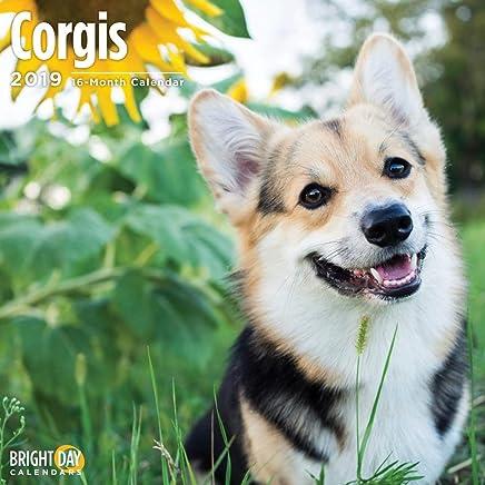 Corgis 2019 16 Month Wall Calendar 12 x 12 Inches