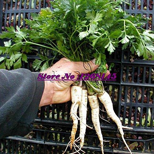 Go Garden Importé 20pcs Hambourg Enracinée persil plante bonsaï légume bricolage jardin maison JG34