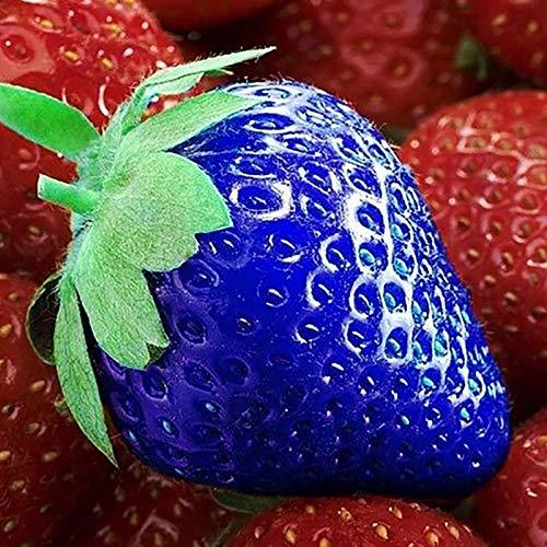 XQxiqi689sy 100Pcs / Bolsa Semillas De Fresa Vitamina Nutritiva Colorida Semillas De Frutas De Granja No Transgénicas Azul
