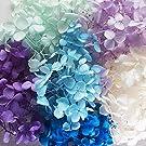 アジサイ・ヘッド プリザーブドフラワー約10g 6色アソートブルー(b) 小分け レジン パーツ クラフト あじさい ハーバリウム用 花材 材料 フォトフレーム作り アレンジメント 花資材