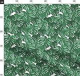 Pflanze, Blätter, Palme, Monstera, Tropisch, Palm Springs