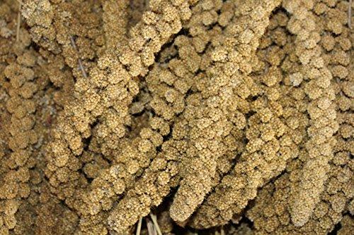 FutterXL 5kg kolbenhirse gelb