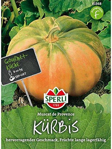 Kürbis Muscade de Provence
