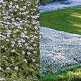 Zoom IMG-2 inkeme giardino 100pcs blue ground