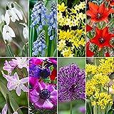 200x Blumenzwiebeln Mix 'Lots of Variety' | Vielseitige Blumen Mischung | Frühjahrsblüher Zwiebeln | Blumenzwiebeln Mehrjährig Winterhart