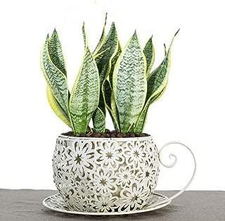 Better-way Farmhouse Favorites Metal Planter Modern Flower Pot Succulent Plant Container Decorative Indoor Pots Rustic Decor(Teacup)