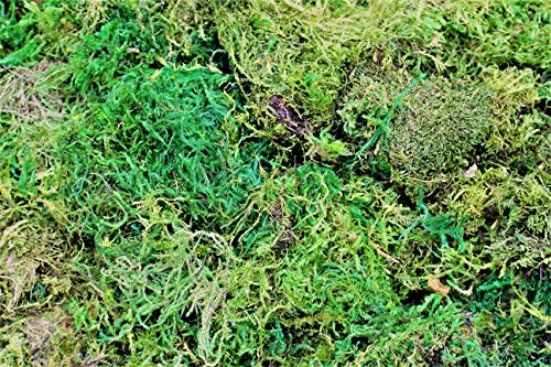 DALAMODA Soft Sheet Moss Mini (Shredded) Preserved Forest Moss,Fresh Green Color Floral Moss for Fairy Gardens, Terrariums, Any Craft or Floral Project or Wedding Other Arts