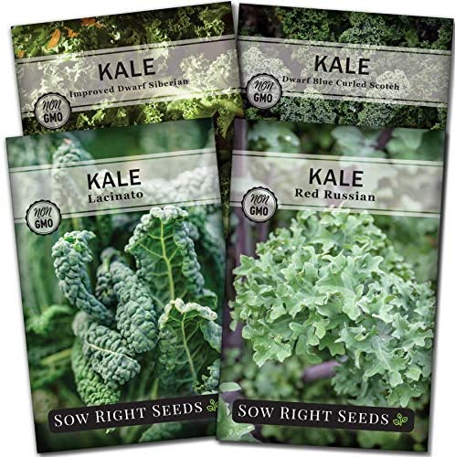 Sow Right Seeds Kale Seed Collection for Planting Non GMO Heirloom Packet with Instructions product image