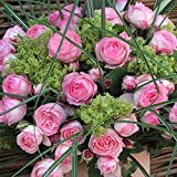"Kletterrose ""Mini Eden Rose"" - Hellrosa blühende Topfrose im 6 L Topf - frisch aus der Gärtnerei - Pflanzen-Kölle Gartenrose"