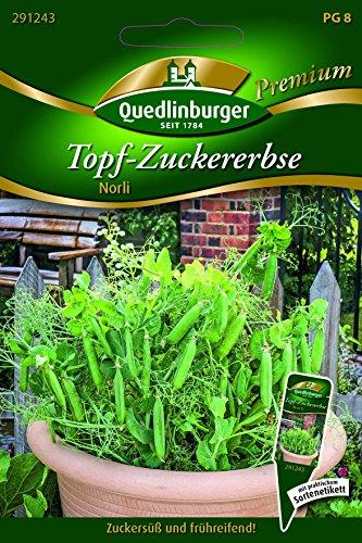 Erbsen Topf-Zucker- Norli - Pisum sativum L. convar. axiphium QLB Premium Saatgut Erbsen