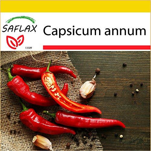 SAFLAX - Kit de culture - Piment de Cayenne - 20 graines - Capsicum annum