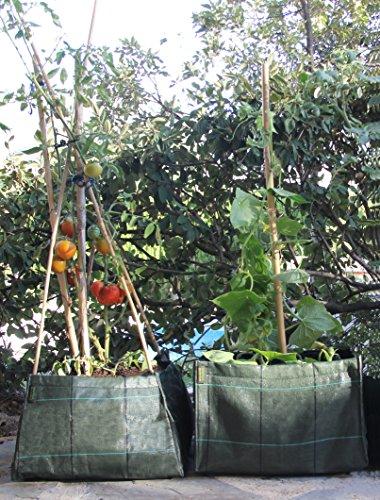 Minihuerto entutorar V454530: Amazon.es: Jardín