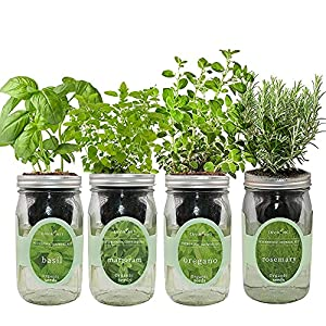 Italian Herb Blend Growing Kits: Easily grow your own healthy Italian herb seasoning: basil, marjoram, oregano and rosemary from seeds at home. All the seeds are heirloom, non-GMO organic seeds. Certified organic by CCOF. Kits Include: 4 beautifully ...
