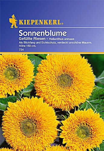 Kiepenkerl Sonnenblume Gefüllte Riesen
