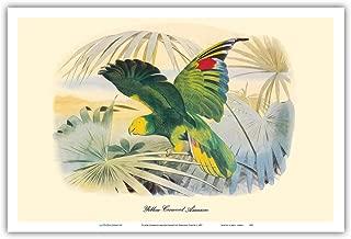 Pacifica Island Art - Yellow-Crowned Amazon Parrot (Amazona ochrocephala) - Vintage Bird Illustration by Édouard Traviès c.1857 - Master Art Print - 12 x 18in