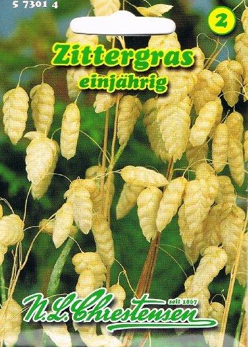 Zittergras Briza maxima Ziergras für ca. 100 Samen