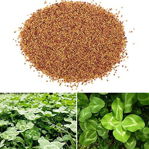 Zyyini Wasserpflanzensamen, Wassergras Samen für Aquarien, Landschaftsbau, dekorative Pflanze