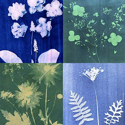 SUNCREATIONS Cyanotype Papier, hohe Empfindlichkeit, Sunprint Nature Druckset, 14.5 x 21 cm, A5, 40 Blatt, sonnenaktiviert