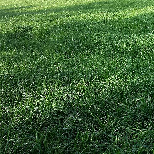 Welsches Ivraie (Lolium Multiflorum) 25 kg Diploid Futtergras Foins Silage