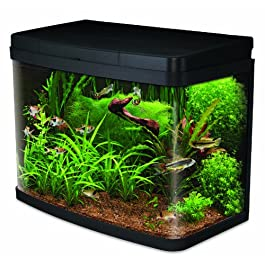 Interpet Insight Glass Aquariums, Complete Premium Start Up Kit