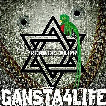 Ganstar4life