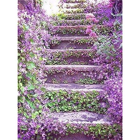 7: 100 piezas de semillas de jazmín trepadoras exóticas semillas de jazmín coloridas planta fragante semilla de jazmín árabe planta de bonsái jardín de su casa