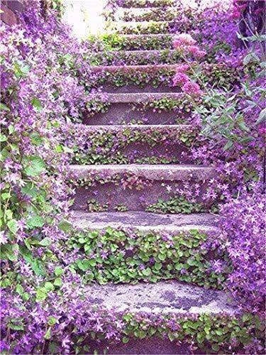 7: 100 pezzi Semi di fiori di gelsomino rampicante esotici Semi di gelsomino colorati Pianta profumata Semi di gelsomino arabo Pianta bonsai Giardino domestico