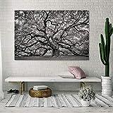 DECORARTE - Cuadros Impresión Digital - Fotografía sobre Cristal Nature 012 (180X120)