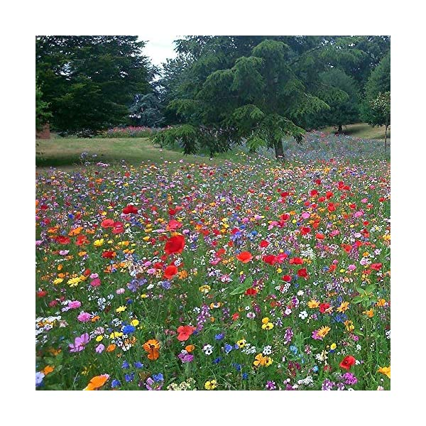 UK 100% Wild Flower Seed Mix Annual Meadow Plants Attracts Bees & Butterfly Mix 3